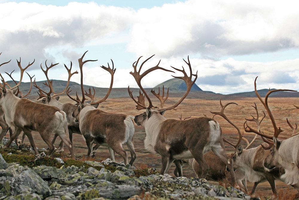 Foto: RIngebu fjellstyre, Erik Hagen