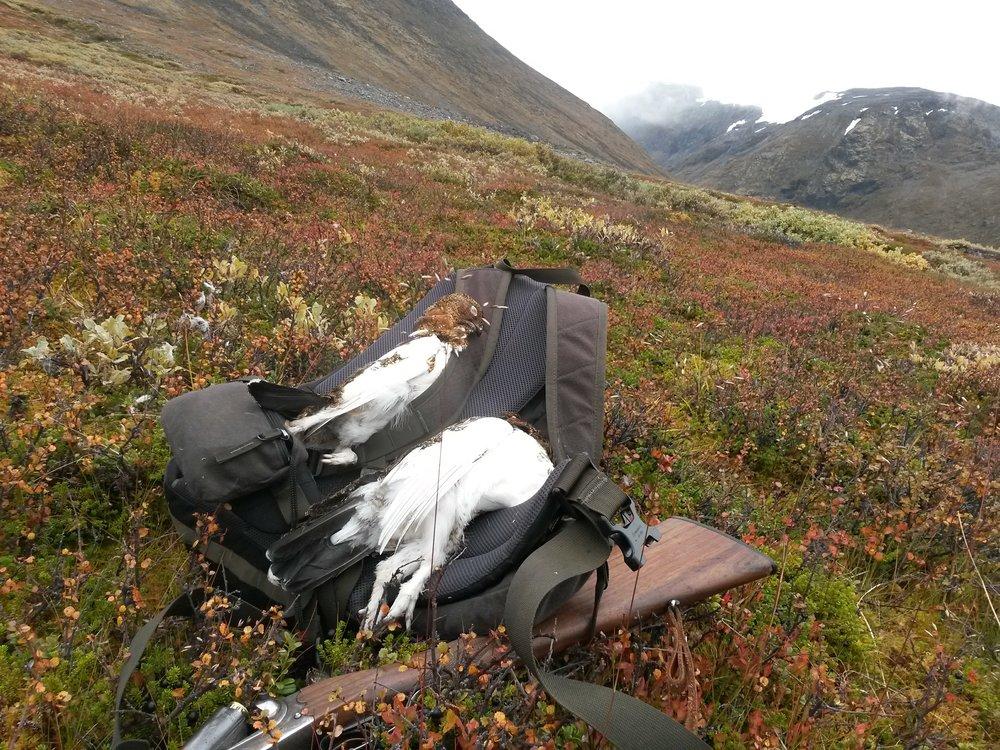 Flott natur og fien opplevelser på jakt hos Lom fjellstyre