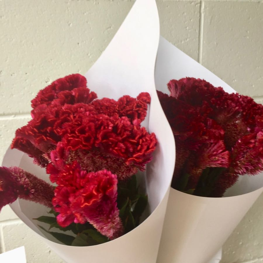 Celosia Brains VIC $40 bunch