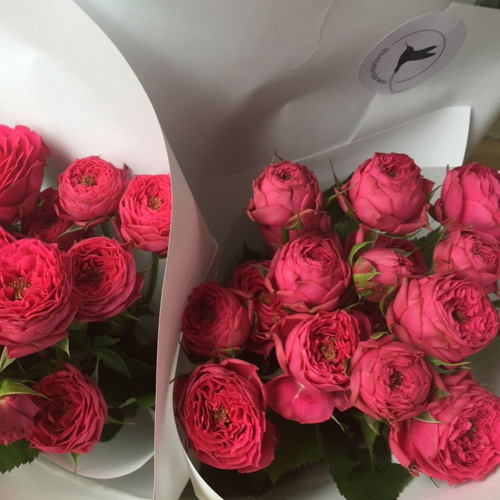 Rose Classic or Sprays VIC $40 bunch (5 stems)