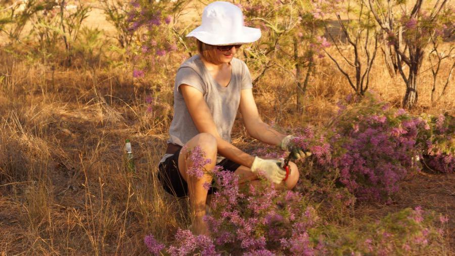 Maria Okwa making a turkey bush installation