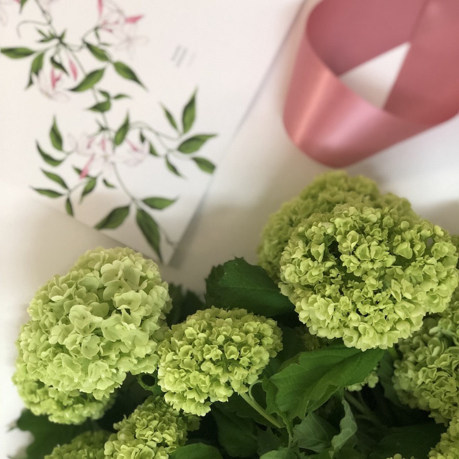 spring flower, lime green viburnum snowball with Darwin florist Beija Flor gift card.