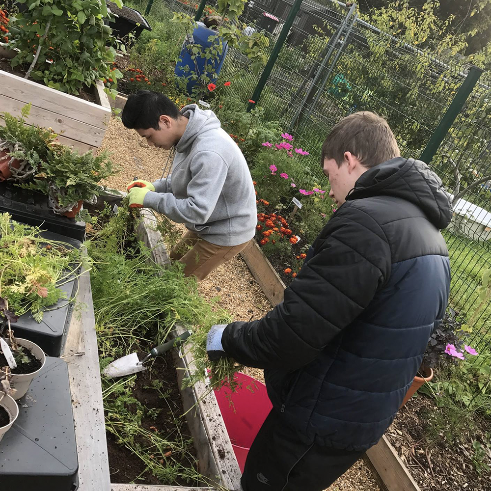Incredible Edible Salford - We provide educational packages working with our partners at Incredible Edible Salford. Through their community work we deliver vocational programmes of engagement around
