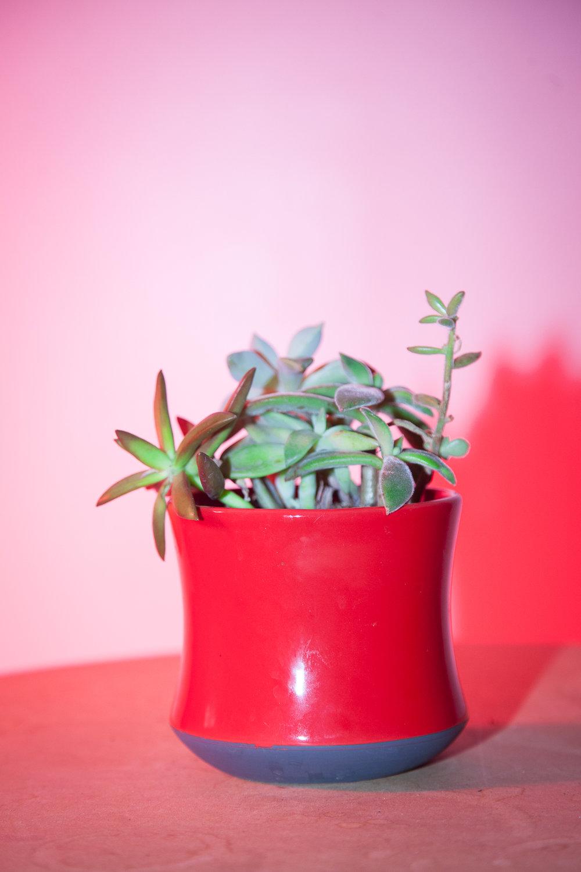 plants-5.jpg