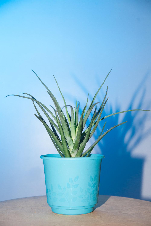plants-8.jpg