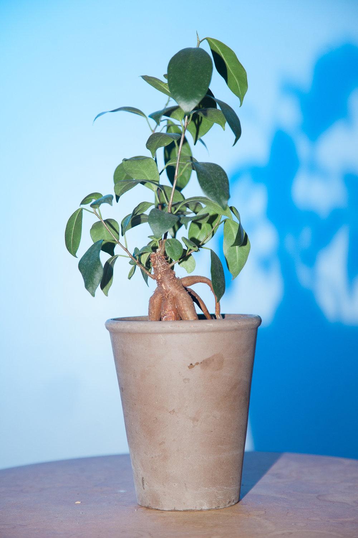 plants-9.jpg