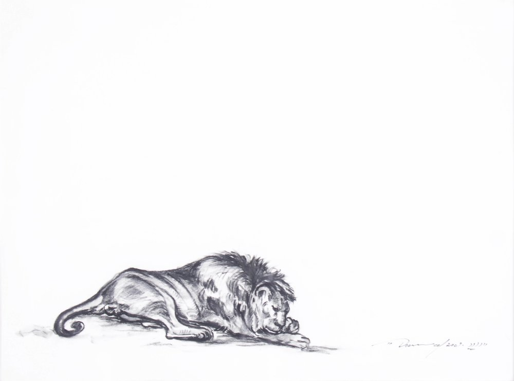 """Sleeping Lion""    18"" x 14""    India ink on Paper"