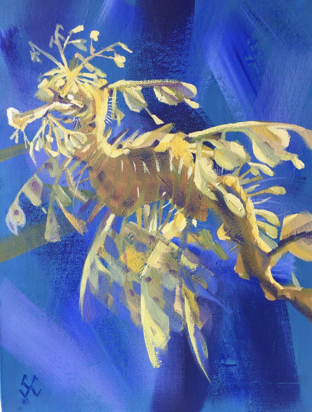 Leafy Sea Dragon ©Susan Clare