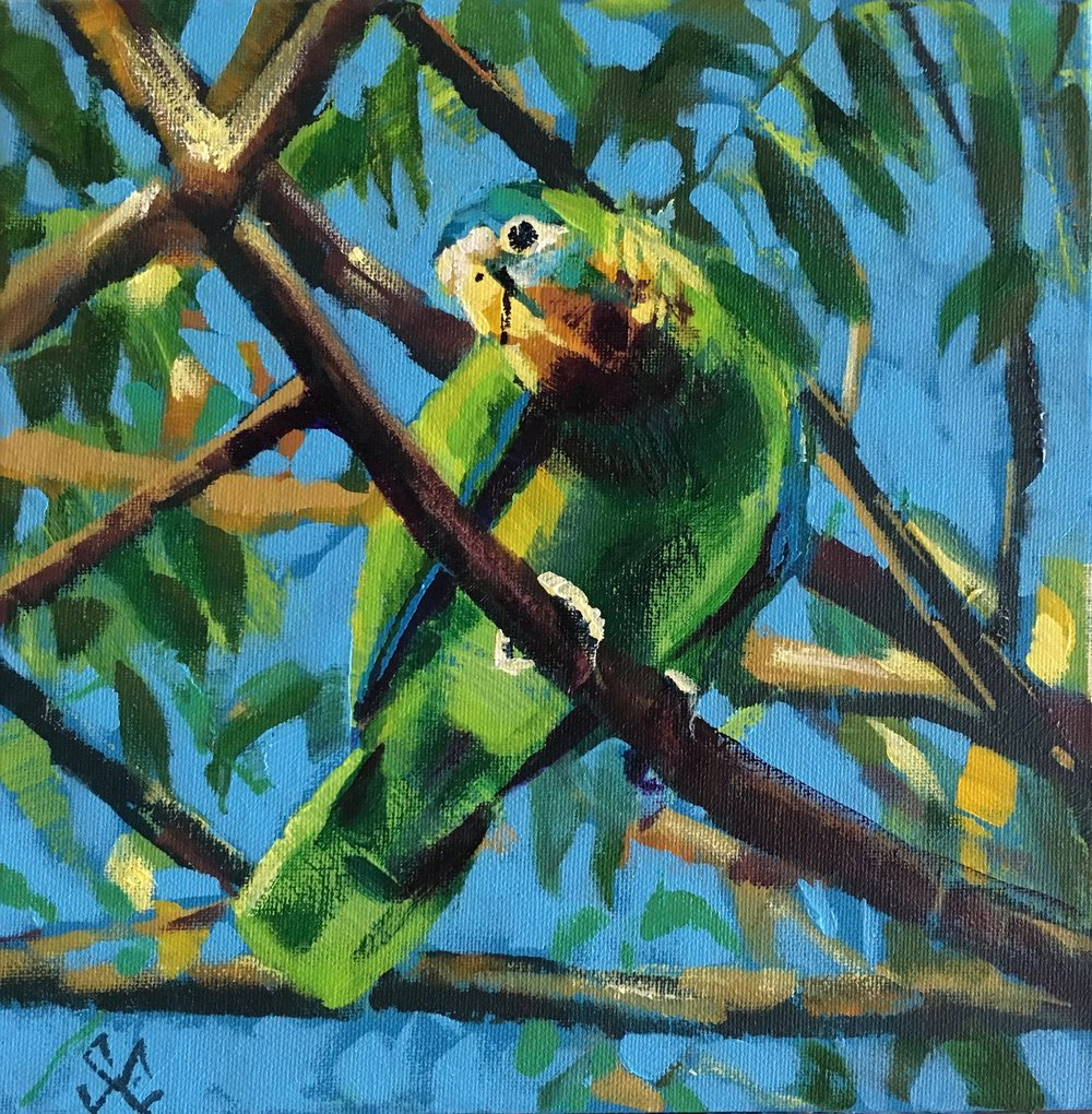 Yellow-billed Parrot at SOS Wildlife Sanctuary, Runaway Bay, Jamaica.