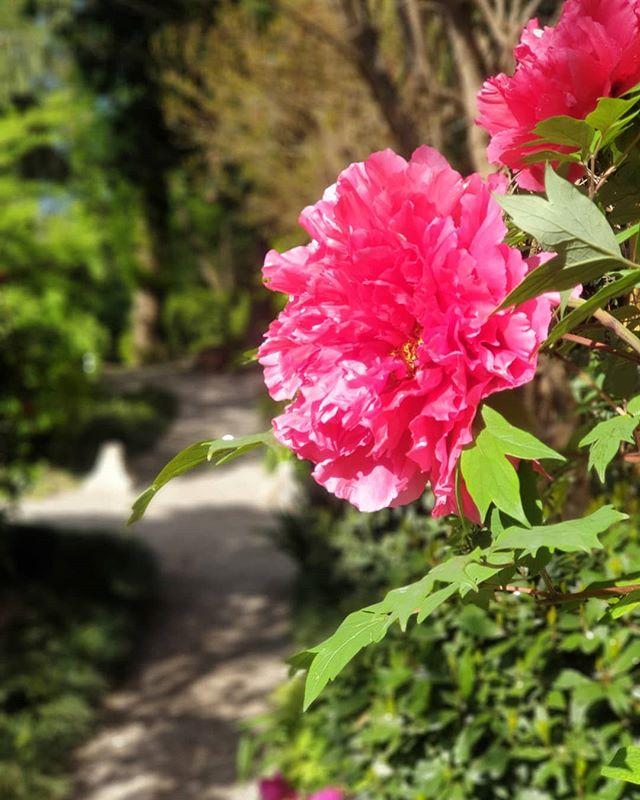 """Aprile con un occhio piange, e con l'altro ride!"" . . . #allefeonde #gardens #peonie #flowers #flowerstagram #holiday #naturelovers #naturephotography #nature #turismomantova #turismobrescia #turismocremona #gardens #gardening #hospitality #gardalake #tourism"