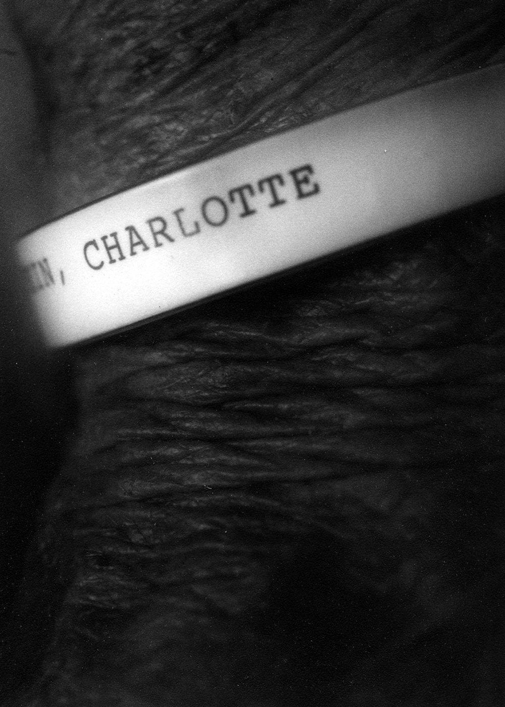 charlotte_12a.jpg