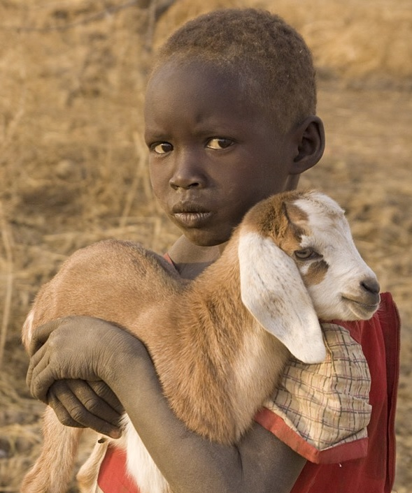 Boy loving goat.jpg