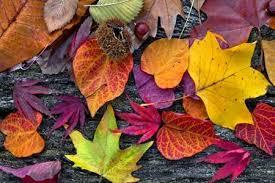 November Leaves.jpg