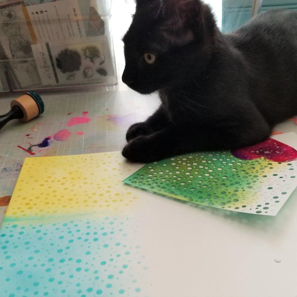 ABNH July Kitten 1.jpg