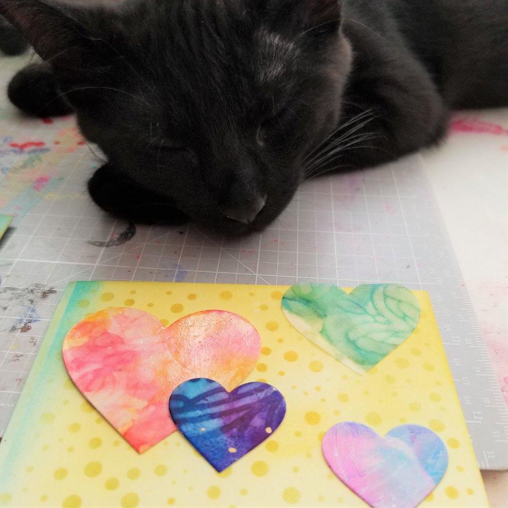 ABNH July Kitten 2.jpg