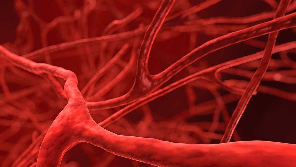 capillary network.jpg