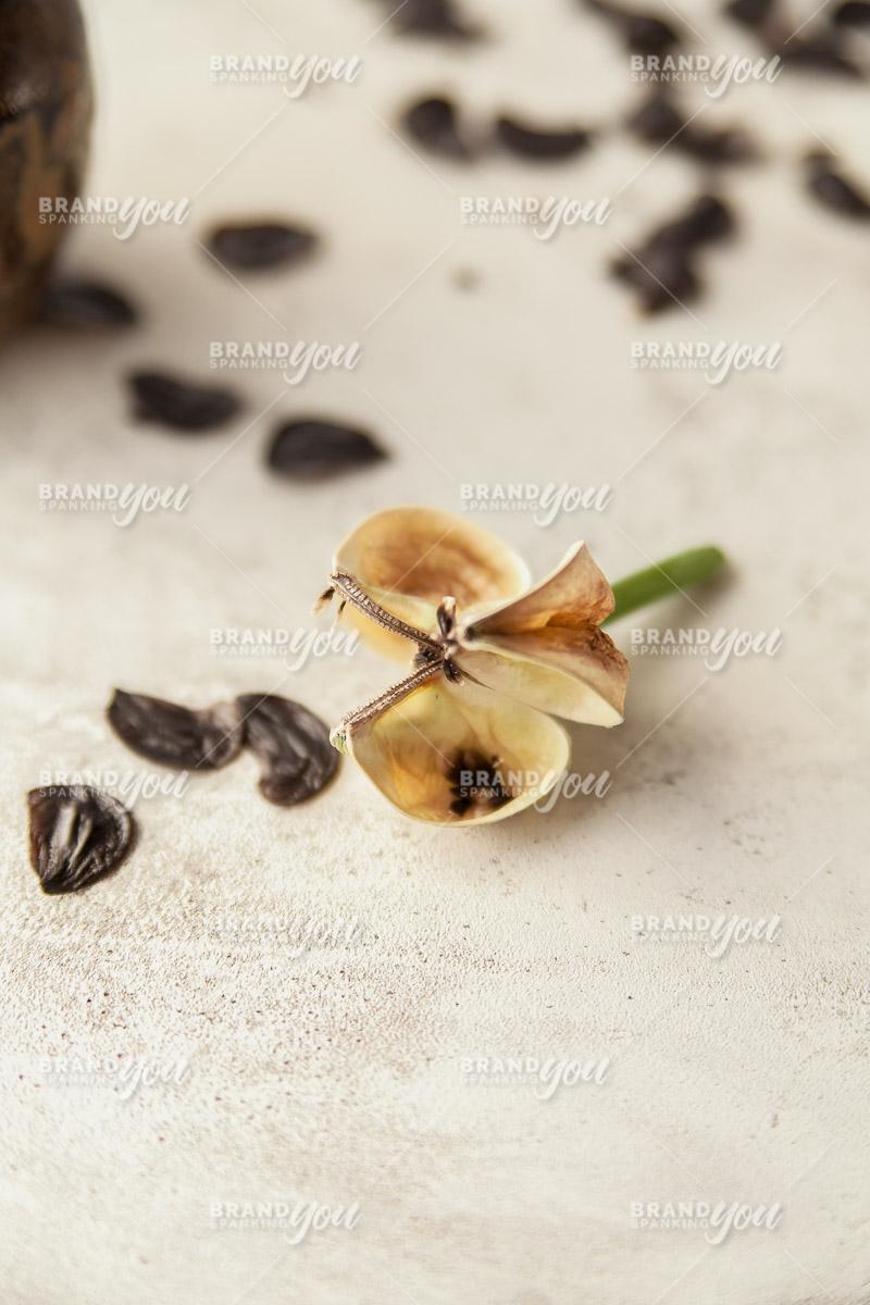 Brand Spanking You Stock Seed Pods Pinterest-2691.jpg