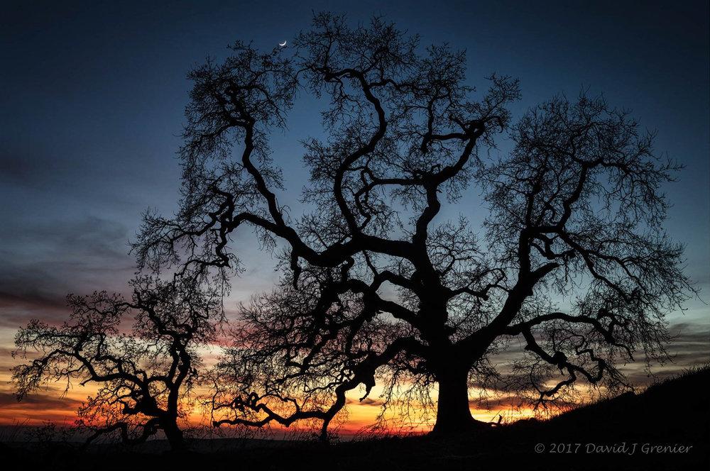 January 31, 2017, Serrano, El Dorado Hills, CA; exp. 1/15 sec @ f/11; 24-105mm lens @ 24mm; ISO 100
