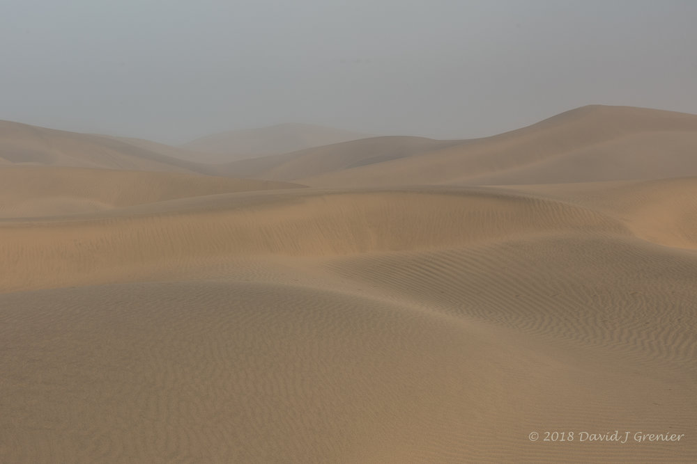 One of the first images shot before the sun burnt through, the beautiful flowing lines of pristine dunes in the fog.