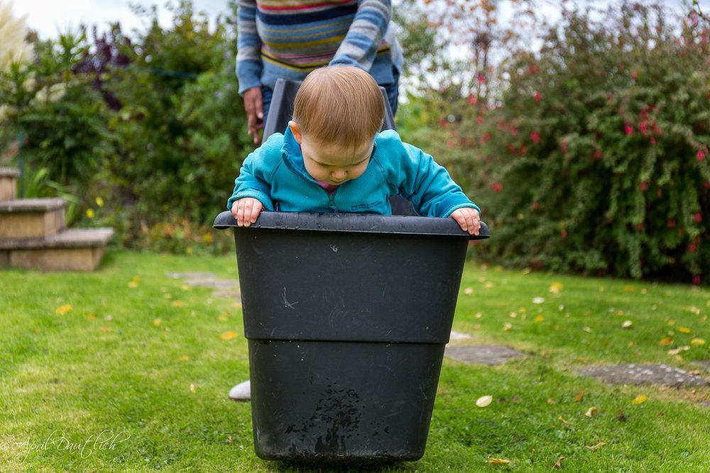 Hazel in garden bucket