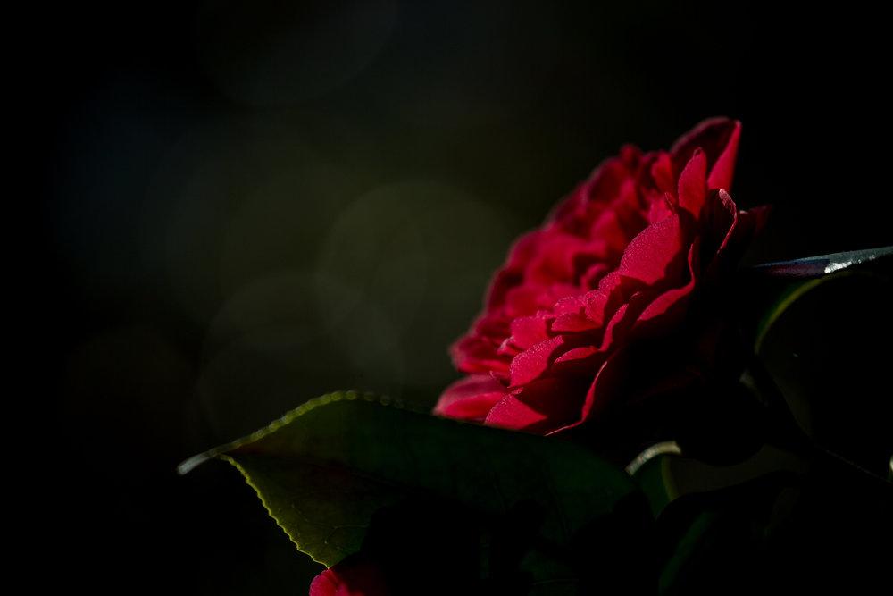 Red spring flower.