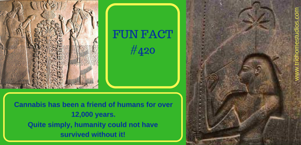 Fun Fact #420 Web Image 001.png