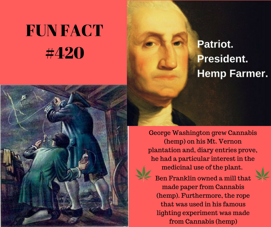 George Washington 's diary entries indicate that he grew hemp at Mount Vernon, his plantation, for about 30 years [approximately 1745-1775]. According to his agricultural ledgers, he had a particular interest in the medicinal use of Cannabis, and several of his diary entries indicate that he indeed was growing Cannabis with a high Tetrahydrocannabinol (THC) content - cannabis.  Ben Franklin  owned a mill that made hemp paper, which allowed America to have a free colonial press without having to beg or justify paper and books from England. Furthermore, the rope that was used in his famous lighting experiment was a hemp rope.