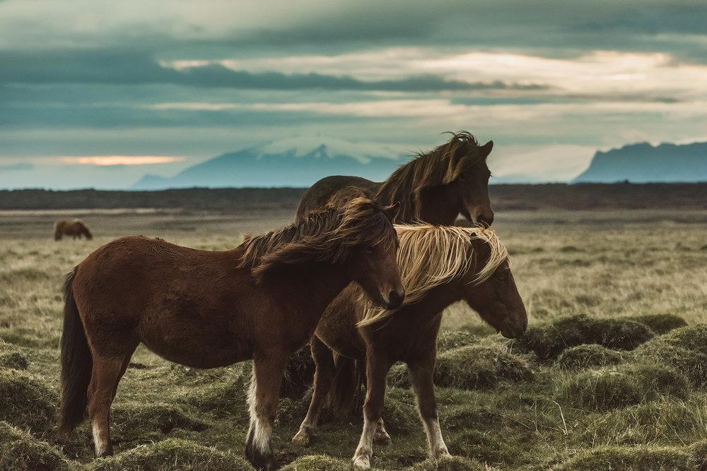 Horses1 IG.jpg