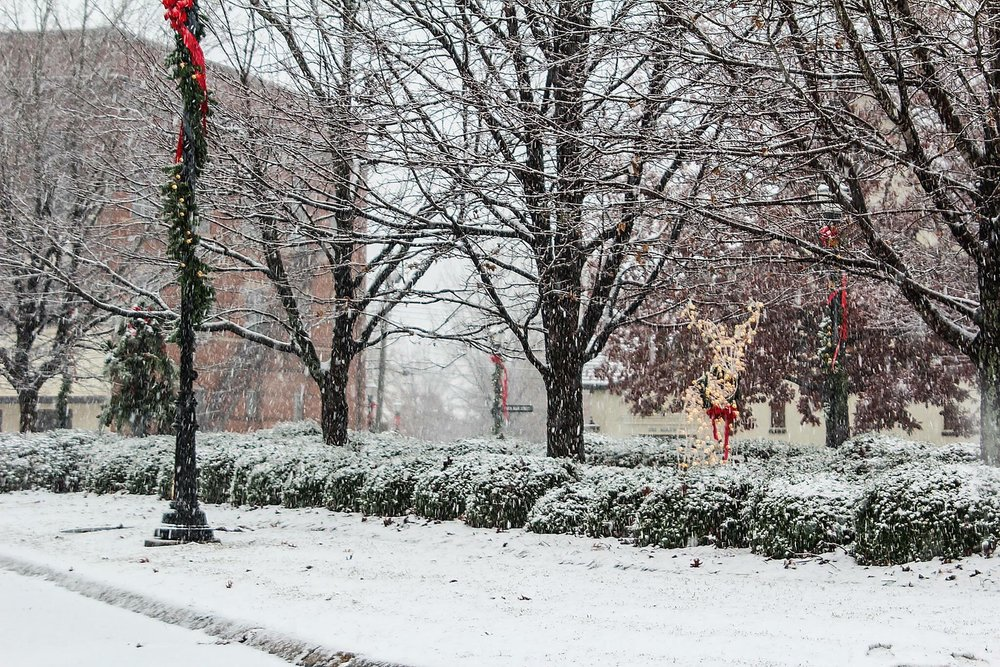 snowyalexcity2.jpg