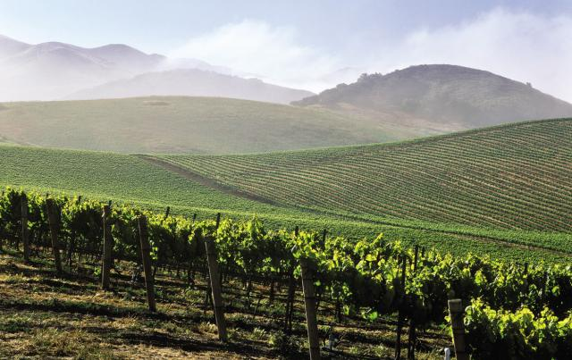 santa_barbara_vineyards_ttm.jpg