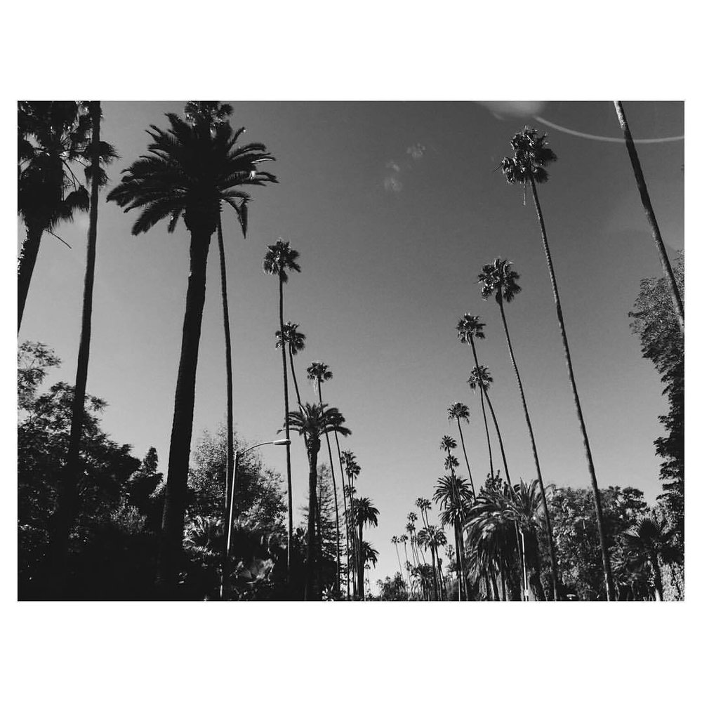 Beverly Hills dreaming #palmtrees #la #losangeles #theurbanexpat #bestofvsco #instabest #neveraboringmoment #passionpassport #mytinyatlas #TellOn #vscolosangeles #instalosangeles #vscola #instala #blackandwhite  (at Beverly Hills, California)