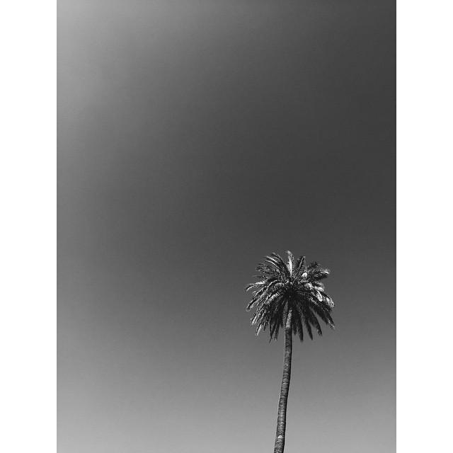 South #south #palmtrees #alcazar #arabiannights #seville #travelbug #travel #TellOn #insta #instabest #instagood #instaseville #vsco #vscocam #vscobest #vscoseville #vscospain #instaspain #passionpassport #bestcities #weekendgetaway #architecture #city #spain #theurbanexpat #mytinyatlas #NeverABoringMoment #europe #livingabroad #liveby #colorfulcity (at Alcázar of Seville)