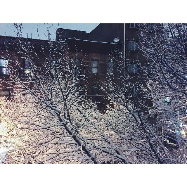 I'm in love with snow #winterwonderland #lastsnowoftheyear #nyc