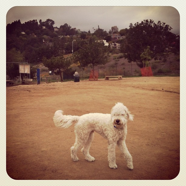 My weekend guest Mr. Logan :) (Taken with  Instagram  at Silver Lake Dog Park)