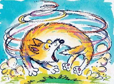 Dog-chasing-tail.jpeg