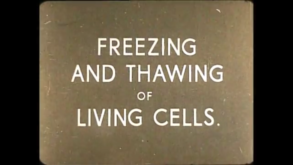 View archive Cryobiology videos and talks from previous SLTB meetings at our  YouTube channel .