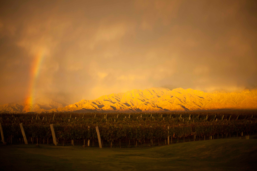 kuche-the-vines-of-mendoza-01.jpg