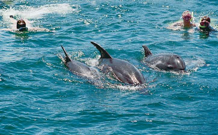 bay-of-islands-swim-with-dolphins-gallery.jpg