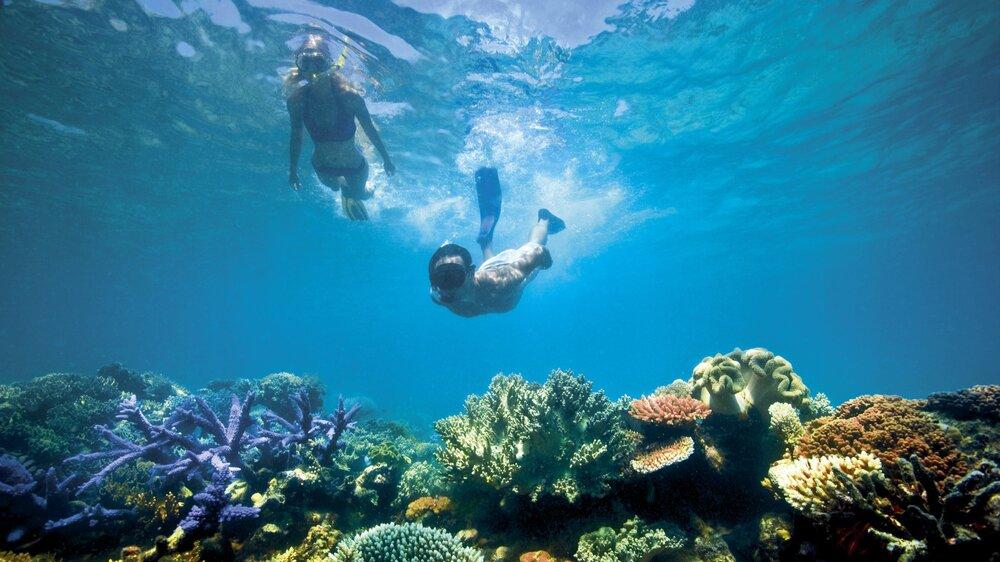 Lizard-island-snorkel.jpg