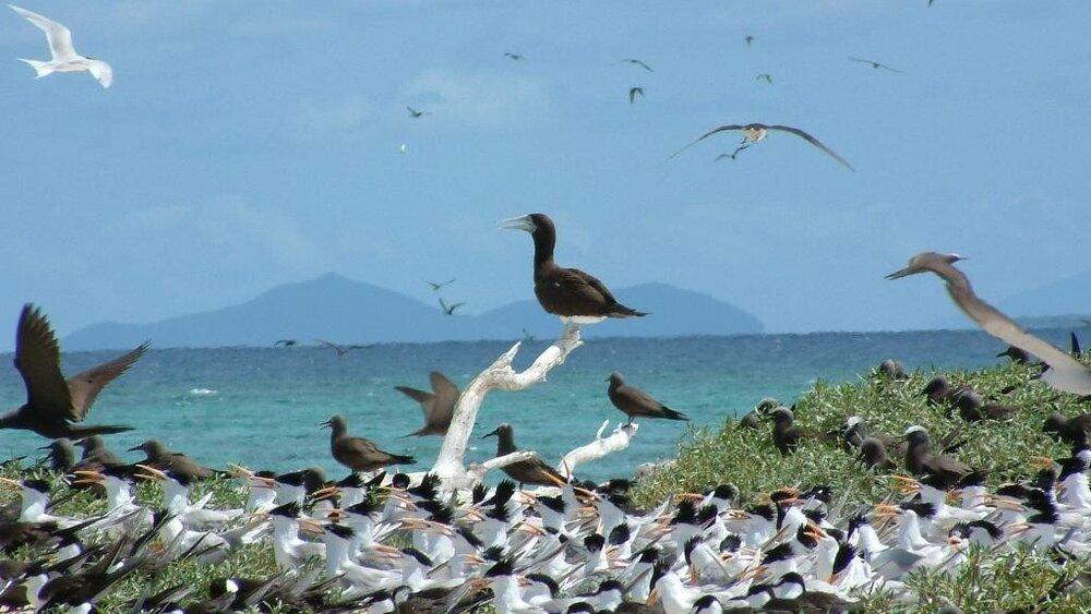 Great_Barrier_Reef_Australia_4.jpg