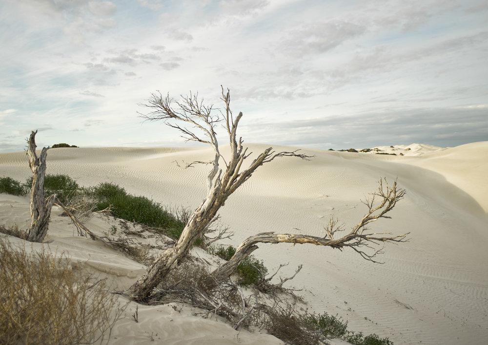Yanerbie Sand Dunes, 2015