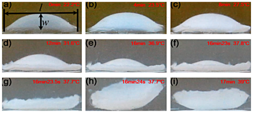 Actuation motion of snap-through hydrogel structure