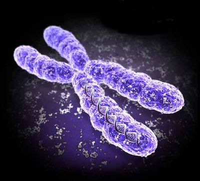 Is Your Second Chromosome Evidence of Intervention Theory