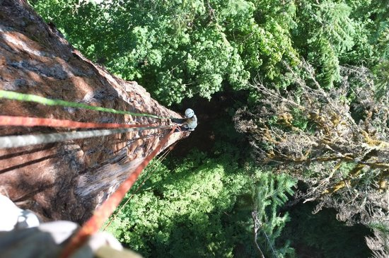 pacific-tree-climbing.jpg