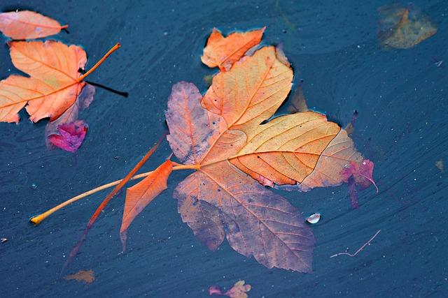 autumn-leaf-3876213_640.jpg