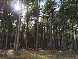 rendlesham forest.jpeg