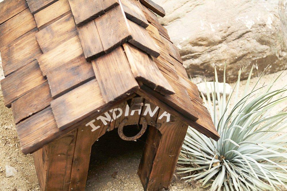 Indiana_the_dog