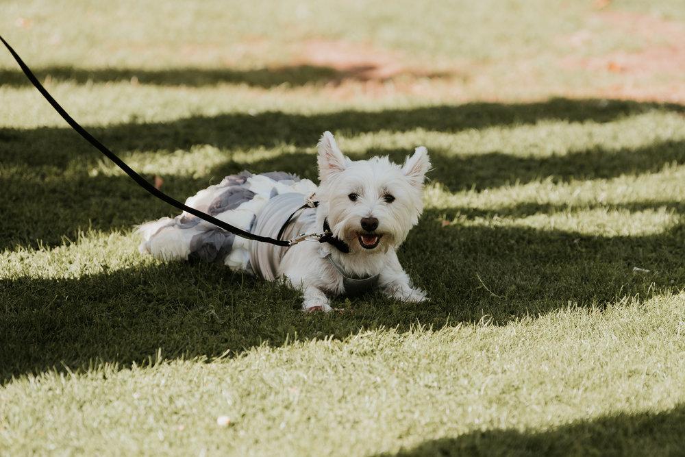 dog at wedding Berkshire