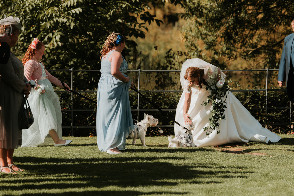 Bride greeted by pet dogs Sonning