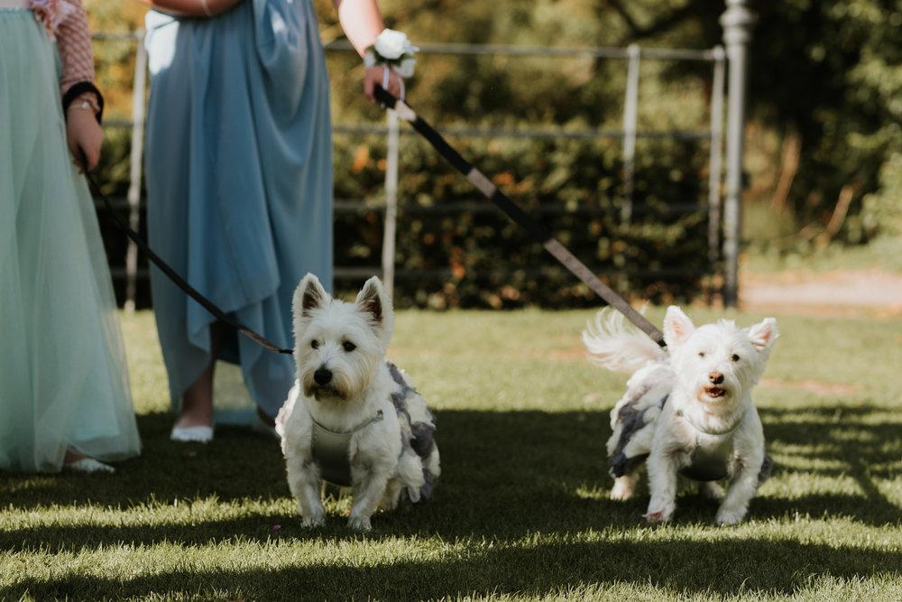 Dog bridesmaids Sonning